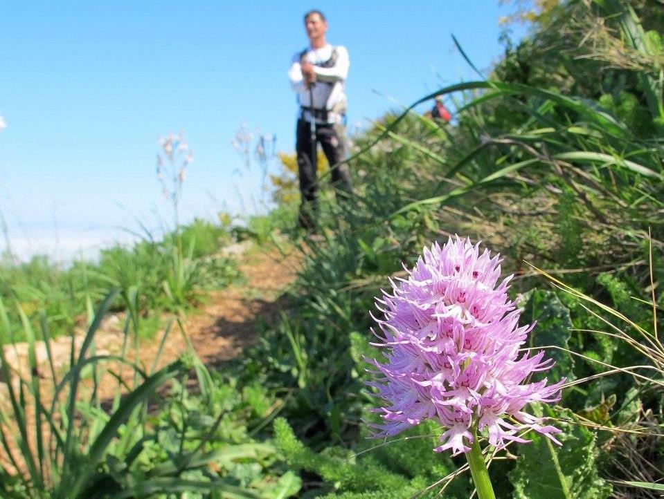 Orchis italica - Ph I. Mannarano