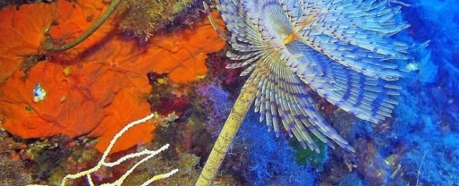 subacquea ustica immersioni diving