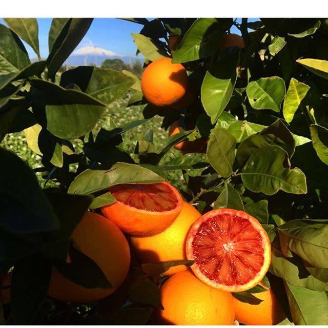 Arance rosse di Sicilia - ph. Il Moro di Sicilia