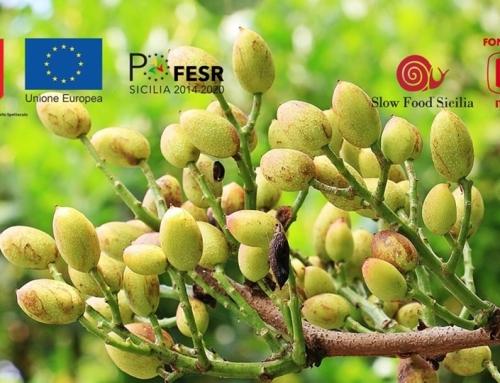 Il treno del pistacchio verde di Bronte e della frutta etnea