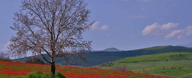 campagna siciliana - entroterra - country