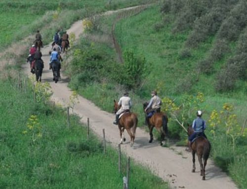 Horse Trails in Sicily